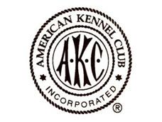 American Kennel Club | Nuforest Dachshunds